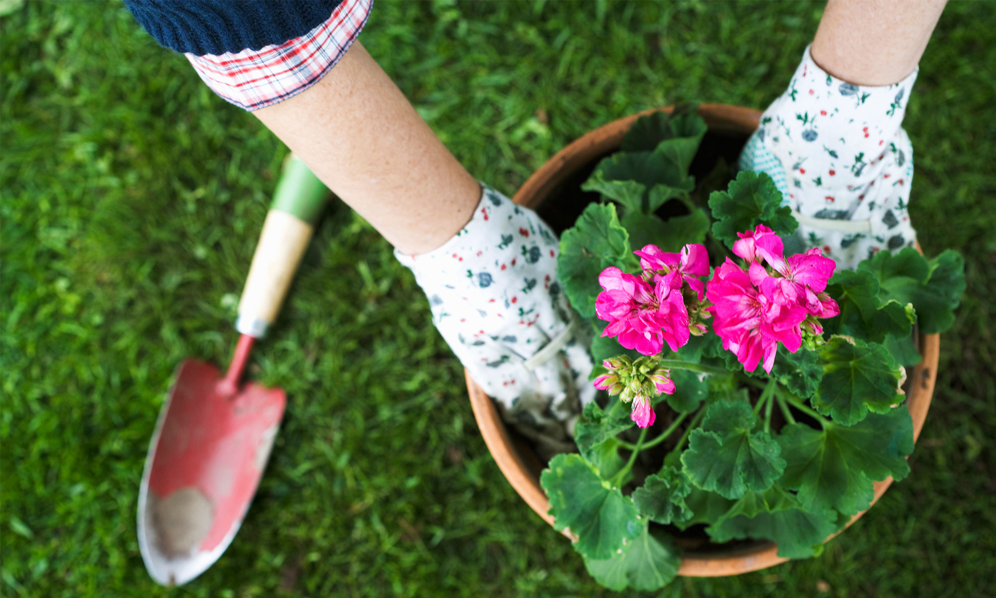 The hands of a woman setting a flower in a pot.